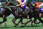 Horse Racing South Africa