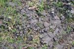 Earthworm1.jpg