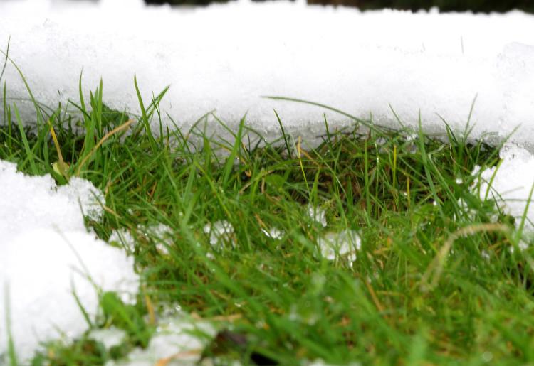 Yellow grass patch under blanket