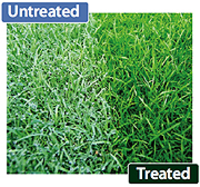 Dewcure Dew Dispersal Treated Grass