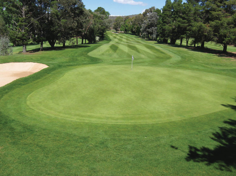 Anatomy of a golf course - Greens   Pitchcare