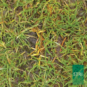 Anthracnose controlled by Interface