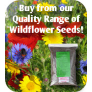 Wildflower Seeds at ALS