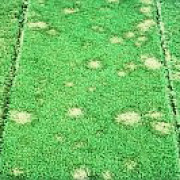 Brown Patch controlled by Instrata