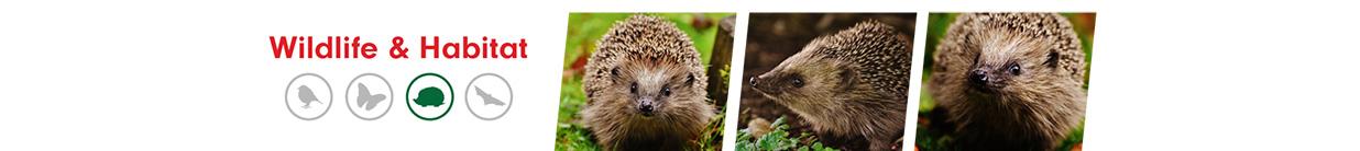 Hedgehog ALS Category Banner