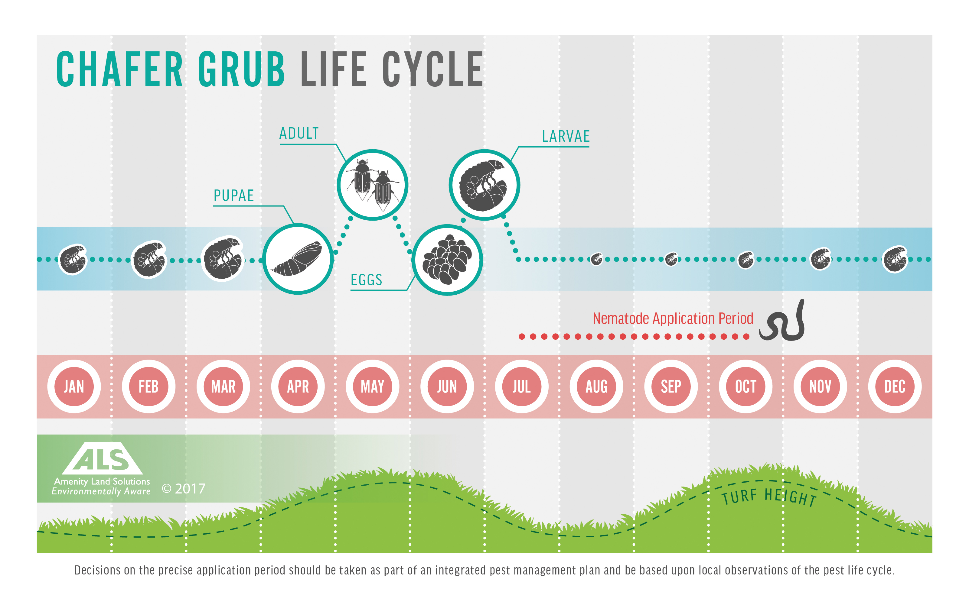 Chafer Grub Life Cycle Diagram