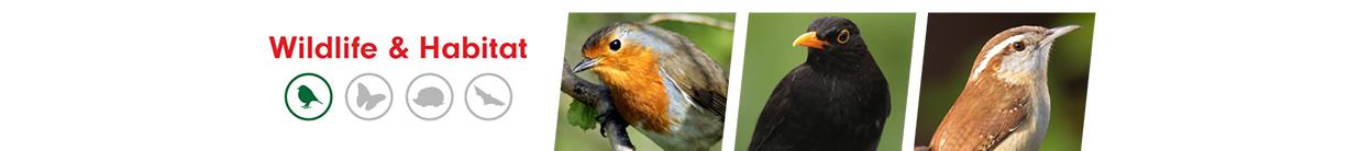 Birds ALS Category Banner