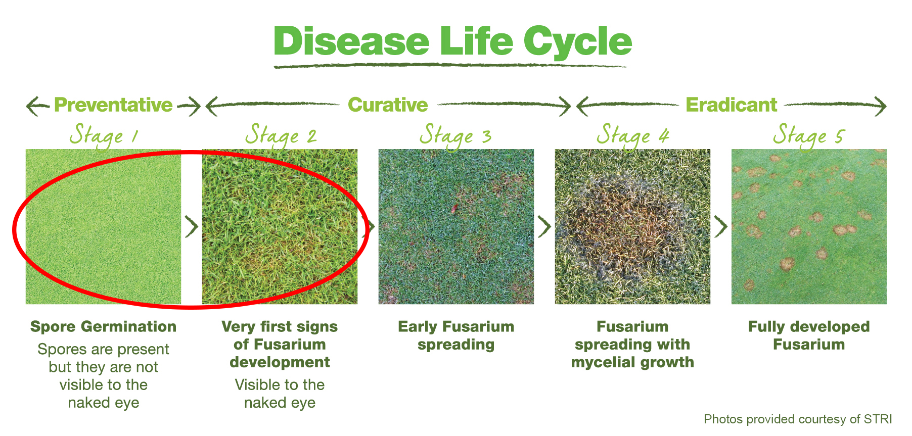 Disease Life Cycle of Fusarium