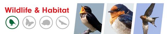 Swallow Nest - Amenity Ecology