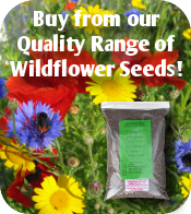 Wildflower Seeds at Pitchcare