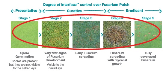 Degree of Interface control over Fusarium Patch