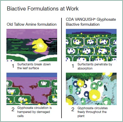 Biactive formulations at work