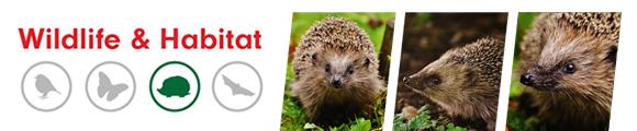Hedgehog House - Amenity Ecology