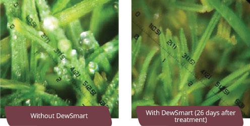 With and without DewSmart application