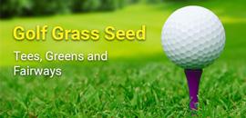 golf grass seed