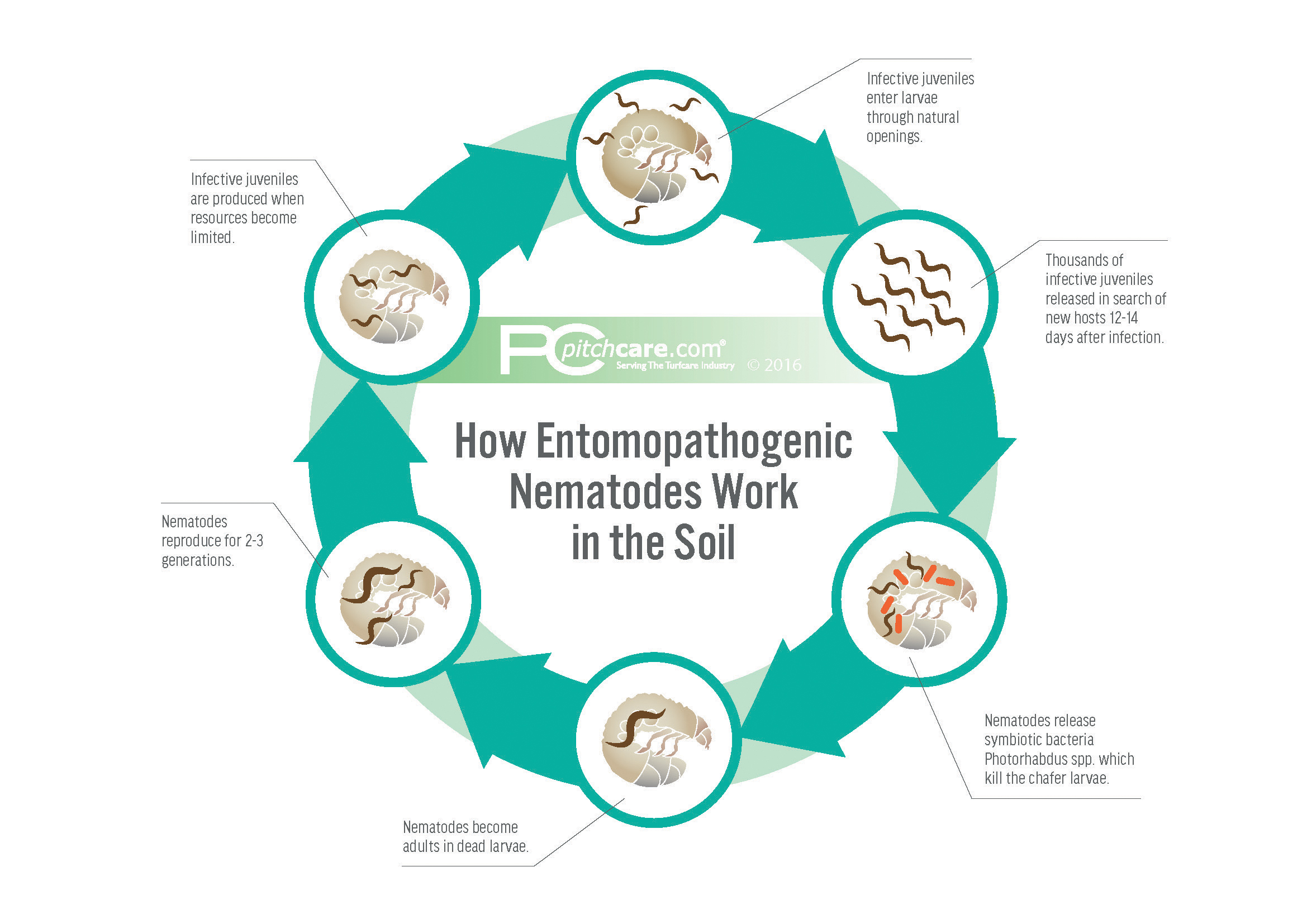 Nemasys chafer grub killer 500sqm biological pest for Soil life cycle