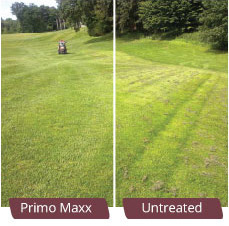 Primo Maxx before and after treatment