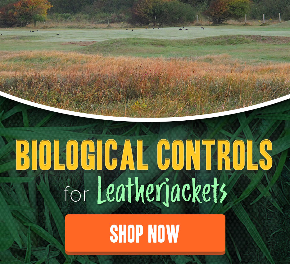 Biological Controls for Leatherjackets