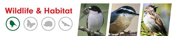 Metal Conqueror Bird Seed Feeder - Amenity Ecology