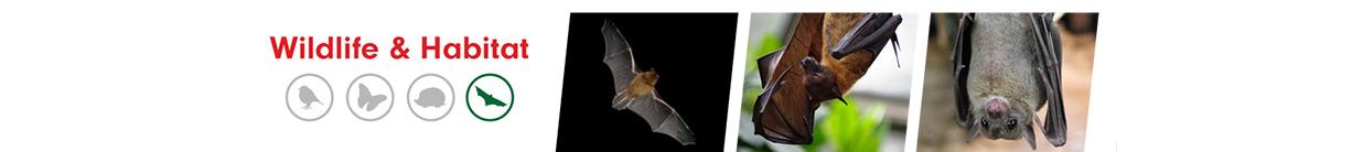 Bats ALS Category Banner white bg