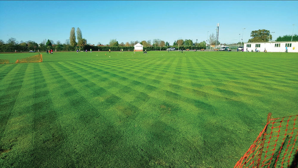 Lawn care - a career path for turf professionals? Background