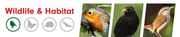 Four Seasons Bird Seed - Amenity Ecology