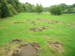 Damage caused by Chafer Beetle