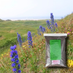 Coastal Wildflower Seeds