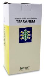 Terranem