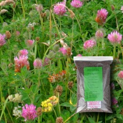 Flowering Lawn Wildflower Seed