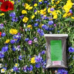 Annual Wildflower Seeds