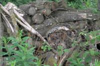 FulfordHeath Logs