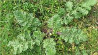 rusted-weeds-1.jpg