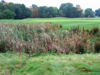 5.  Overgrown pond with bulrushes.JPG