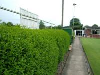 newprt-bowls-hedge.jpg