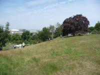 acidgrassland2