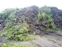 Green-waste-at-Brier-Hills-.jpg