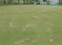 006 Early signs of dry patch on green