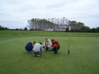 Copy-of-Fescue-Greens-at-Sm.jpg
