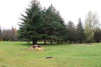 Hamilton Trees