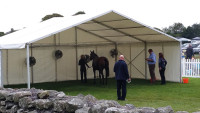 Cartmel AGr Horse cooling