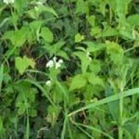 nettles-habitat.jpg