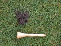 USGA-earthworm-1.jpg
