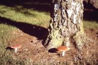 DruidsHeath Fungi
