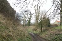 PickeringCastle MatureTrees