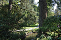 Bodnant Stream&Path