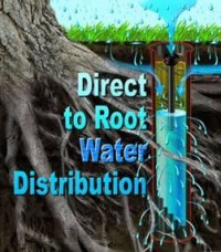Direct watering to the roots allows any excess water to evaporate quickly