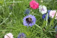 FulfordHeath Bumblebee
