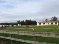 Equestrian is very popular also at the school