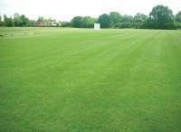 CricketSummer07.jpg